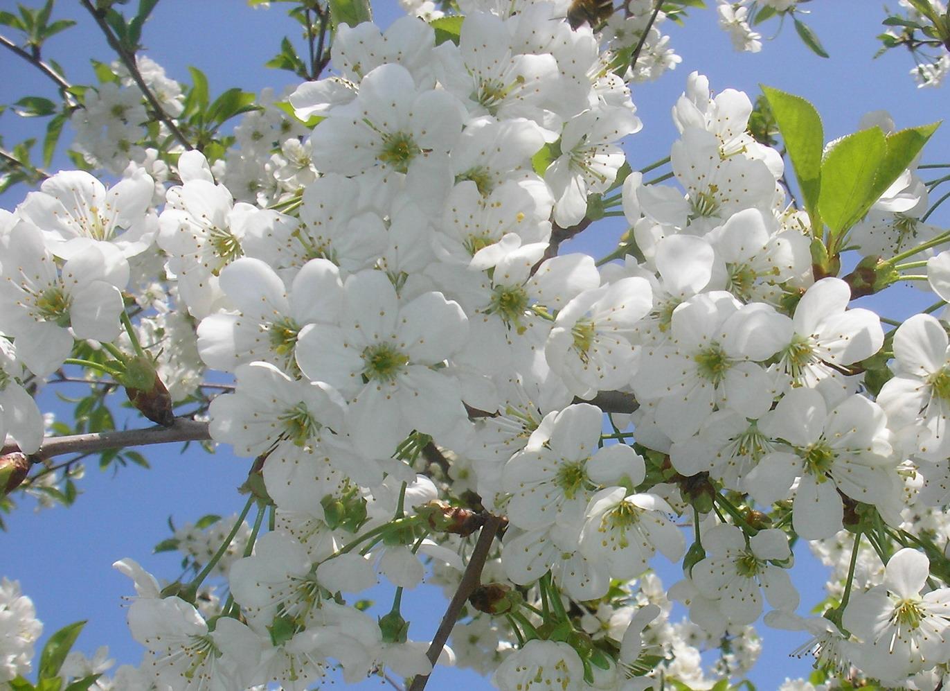 Сады цветут открытки, днем