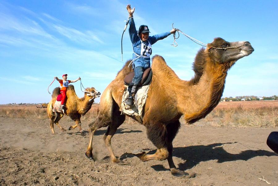 Смешной спорт, смешные картинки толстая женщина на верблюде