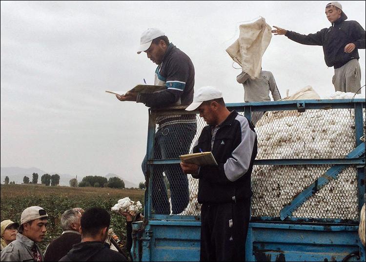 Студенты ташкентских вузов поедут на хлопок